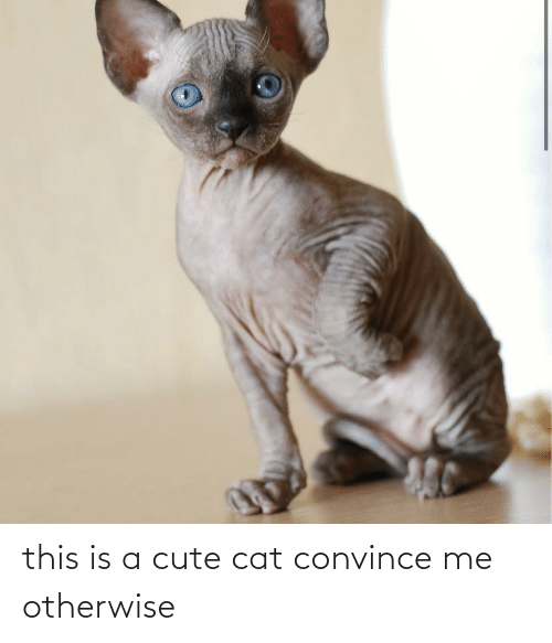otherwise: this is a cute cat convince me otherwise