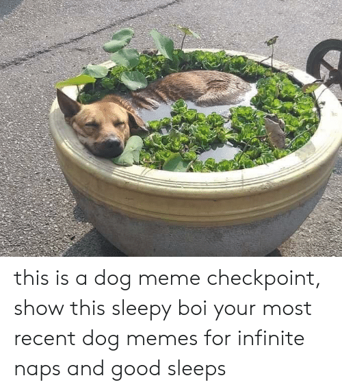Dog Meme: this is a dog meme checkpoint, show this sleepy boi your most recent dog memes for infinite naps and good sleeps