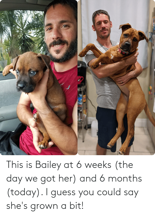 I Guess You Could Say: This is Bailey at 6 weeks (the day we got her) and 6 months (today). I guess you could say she's grown a bit!