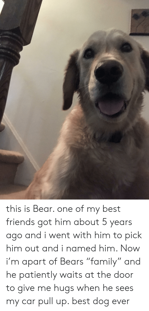 """Friends, Bear, and Bears: this is Bear. one of my best friends got him about 5 years ago and i went with him to pick him out and i named him. Now i'm apart of Bears """"family"""" and he patiently waits at the door to give me hugs when he sees my car pull up. best dog ever"""