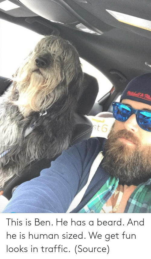 Traffic: This is Ben. He has a beard. And he is human sized. We get fun looks in traffic. (Source)