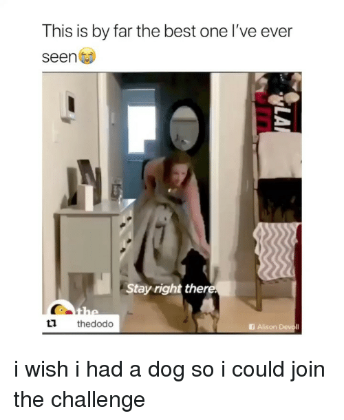 Best, Girl Memes, and Dog: This is by far the best one I've ever  seen  Stay right there.  tl thedodo  I Alison Devoll i wish i had a dog so i could join the challenge