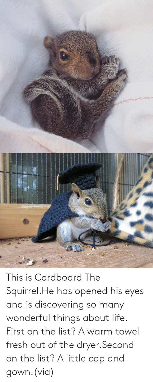list: This is Cardboard The Squirrel.He has opened his eyes and is discovering so many wonderful things about life. First on the list? A warm towel fresh out of the dryer.Second on the list? A little cap and gown.(via)