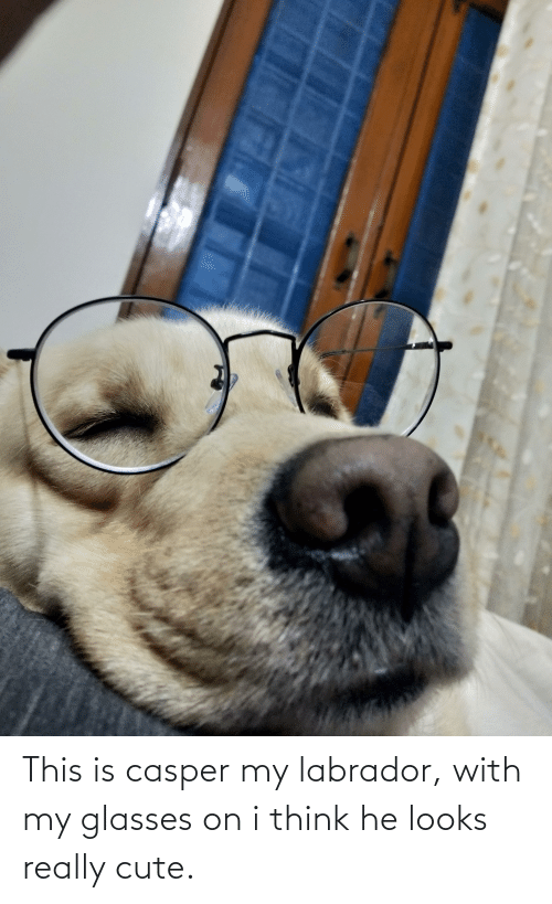 Casper: This is casper my labrador, with my glasses on i think he looks really cute.