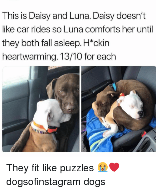 Dogs, Fall, and Memes: This is Daisy and Luna. Daisy doesn't  like car rides so Luna comforts her until  they both fall asleep. H*ckin  heartwarming. 13/10 for each They fit like puzzles 😭❤️ dogsofinstagram dogs