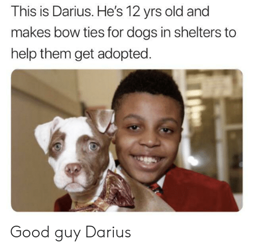 Dogs, Good, and Help: This is Darius. He's 12 yrs old and  makes bow ties for dogs in shelters to  help them get adopted Good guy Darius