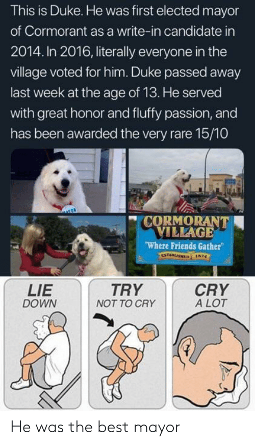 In 2016: This is Duke. He was first elected mayor  of Cormorant as a write-in candidate in  2014. In 2016, literally everyone in the  village voted for him. Duke passed away  last week at the age of 13. He served  with great honor and fluffy passion, and  has been awarded the very rare 15/10  CORMORANT  VILLAGE  Where Friends Gather  ESTABLISHED 1674  LIE  DOWN  TRY  NOT TO CRY  CRY  A LOT He was the best mayor