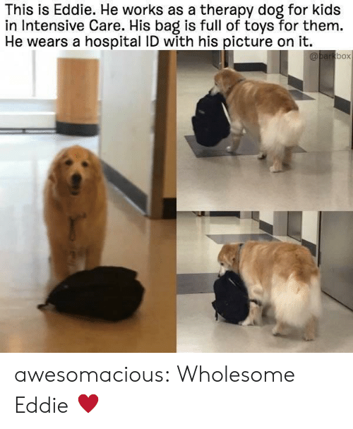 Tumblr, Blog, and Hospital: This is Eddie. He works as a therapy dog for kids  in Intensive Care. His bag is full of toys for them.  He wears a hospital ID with his picture on it.  box awesomacious:  Wholesome Eddie ♥️