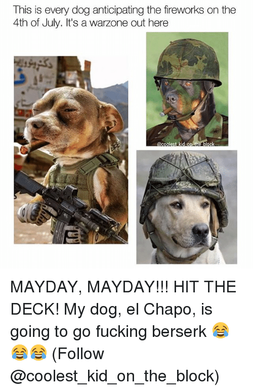Berserk: This is every dog anticipating the fireworks on the  4th of July. It's a  warzone out here  C E MAYDAY, MAYDAY!!! HIT THE DECK! My dog, el Chapo, is going to go fucking berserk 😂😂😂 (Follow @coolest_kid_on_the_block)