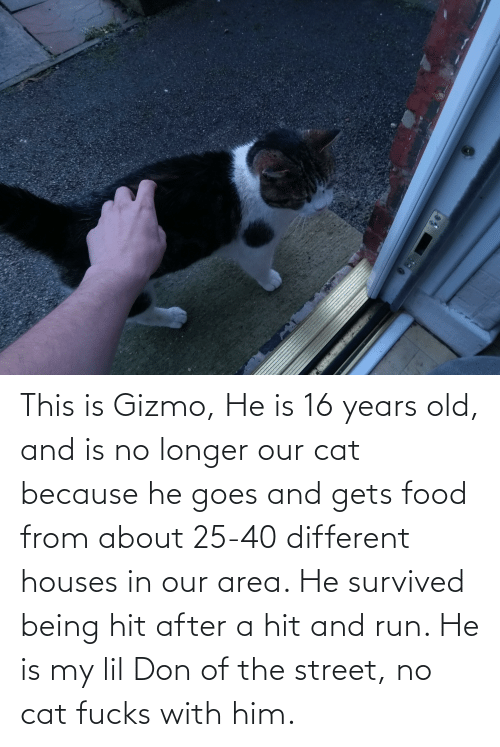 Food, Run, and Old: This is Gizmo, He is 16 years old, and is no longer our cat because he goes and gets food from about 25-40 different houses in our area. He survived being hit after a hit and run. He is my lil Don of the street, no cat fucks with him.