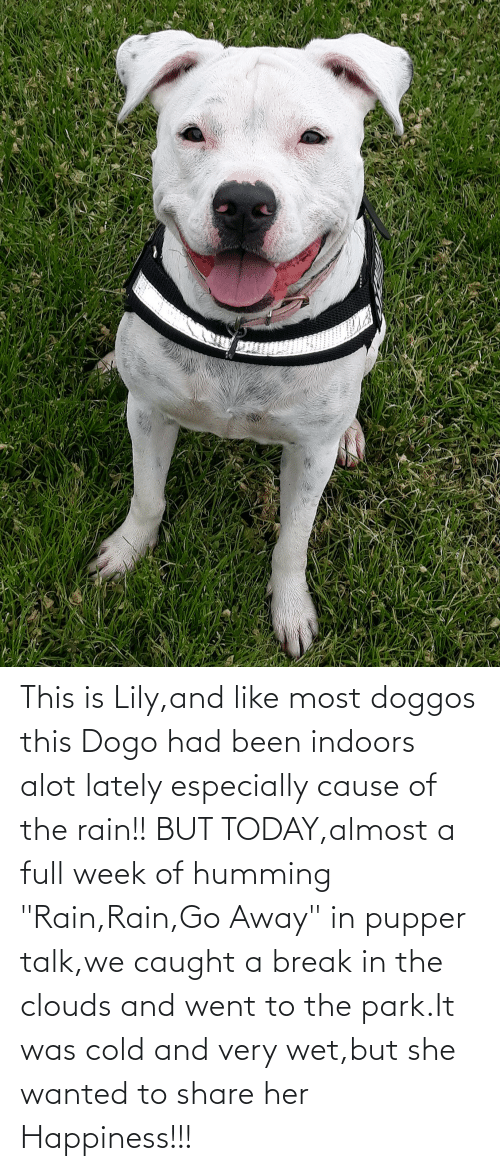 """Indoors: This is Lily,and like most doggos this Dogo had been indoors alot lately especially cause of the rain!! BUT TODAY,almost a full week of humming """"Rain,Rain,Go Away"""" in pupper talk,we caught a break in the clouds and went to the park.It was cold and very wet,but she wanted to share her Happiness!!!"""