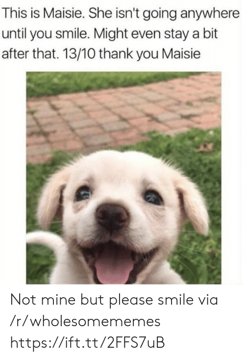 Thank You, Smile, and Mine: This is Maisie. She isn't going anywhere  until you smile. Might even stay a bit  after that. 13/10 thank you Maisie Not mine but please smile via /r/wholesomememes https://ift.tt/2FFS7uB