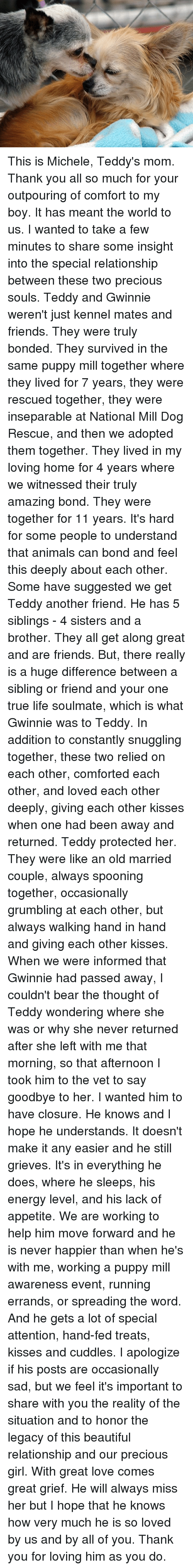 Animals, Anime, and Beautiful: This is Michele, Teddy's mom.  Thank you all so much for your outpouring of comfort to my boy.  It has meant the world to us.  I wanted to take a few minutes to share some insight into the special relationship between these two precious souls.  Teddy and Gwinnie weren't just kennel mates and friends.  They were truly bonded.  They survived in the same puppy mill together where they lived for 7 years, they were rescued together, they were inseparable at National Mill Dog Rescue, and then we adopted them together.  They lived in my loving home for 4 years where we witnessed their truly amazing bond.  They were together for 11 years.  It's hard for some people to understand that animals can bond and feel this deeply about each other.  Some have suggested we get Teddy another friend.  He has 5 siblings - 4 sisters and a brother.  They all get along great and are friends.  But, there really is a huge difference between a sibling or friend and your one true life soulmate, which is what Gwinnie was to Teddy.  In addition to constantly snuggling together, these two relied on each other, comforted each other, and loved each other deeply, giving each other kisses when one had been away and returned.  Teddy protected her.  They were like an old married couple, always spooning together, occasionally grumbling at each other, but always walking hand in hand and giving each other kisses.  When we were informed that Gwinnie had passed away, I couldn't bear the thought of Teddy wondering where she was or why she never returned after she left with me that morning, so that afternoon I took him to the vet to say goodbye to her.  I wanted him to have closure.  He knows and I hope he understands.  It doesn't make it any easier and he still grieves.  It's in everything he does, where he sleeps, his energy level, and his lack of appetite.    We are working to help him move forward and he is never happier than when he's with me, working a puppy mill awareness event, running errands, or spreading the word.  And he gets a lot of special attention, hand-fed treats, kisses and cuddles.    I apologize if his posts are occasionally sad, but we feel it's important to share with you the reality of the situation and to honor the legacy of this beautiful relationship and our precious girl.  With great love comes great grief.  He will always miss her but I hope that he knows how very much he is so loved by us and by all of you.  Thank you for loving him as you do.