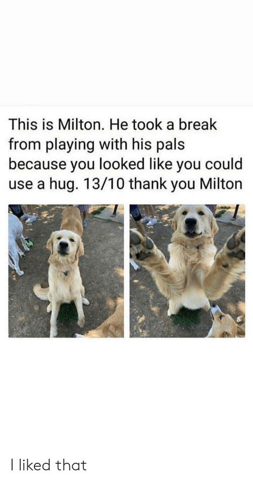 You Looked: This is Milton. He took a break  from playing with his pals  because you looked like you could  use a hug. 13/10 thank you Milton I liked that