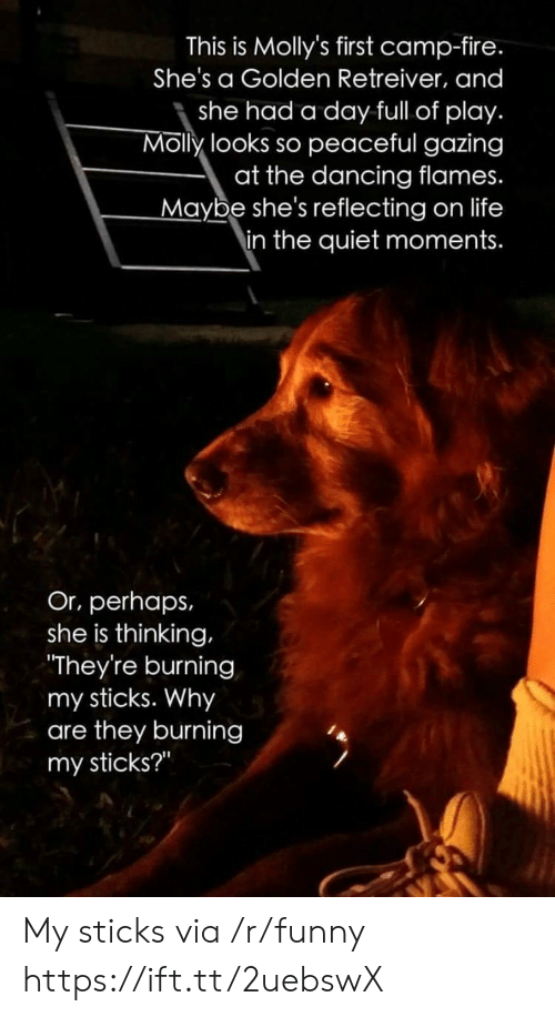 """camp fire: This is Molly's first camp-fire.  She's a Golden Retreiver, and  she had a day full of play.  Molly looks so peaceful gazing  at the dancing flames.  Maybe she's reflecting on life  in the quiet moments.  Or, perhaps,  she is thinking,  They're burning  my sticks. Why  are they burning  my sticks?"""" My sticks via /r/funny https://ift.tt/2uebswX"""