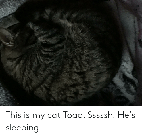 toad: This is my cat Toad. Sssssh! He's sleeping