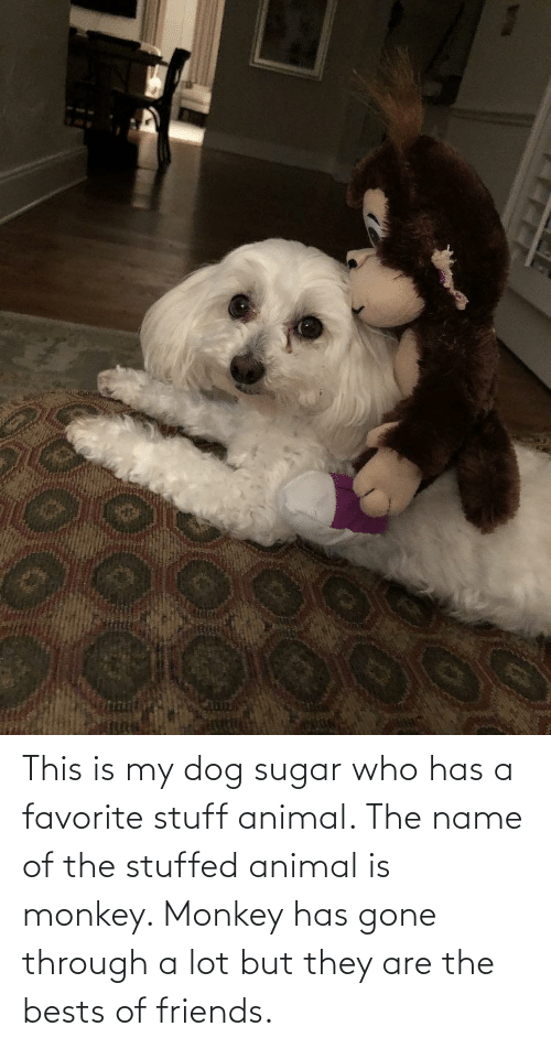 bests: This is my dog sugar who has a favorite stuff animal. The name of the stuffed animal is monkey. Monkey has gone through a lot but they are the bests of friends.
