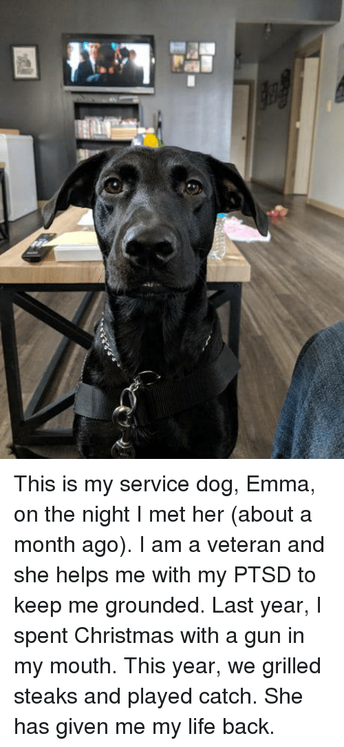 Christmas, Life, and Helps: This is my service dog, Emma, on the night I met her (about a month ago). I am a veteran and she helps me with my PTSD to keep me grounded. Last year, I spent Christmas with a gun in my mouth. This year, we grilled steaks and played catch. She has given me my life back.