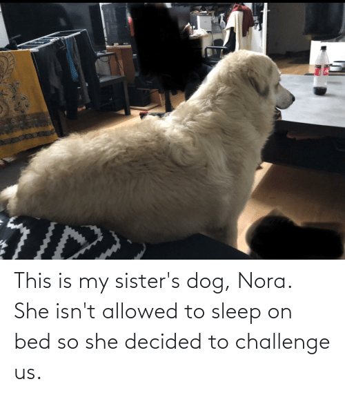 nora: This is my sister's dog, Nora. She isn't allowed to sleep on bed so she decided to challenge us.