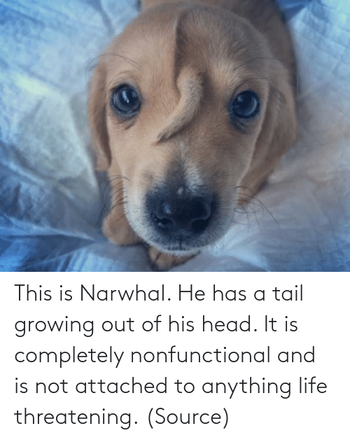 It Is: This is Narwhal. He has a tail growing out of his head. It is completely nonfunctional and is not attached to anything life threatening. (Source)