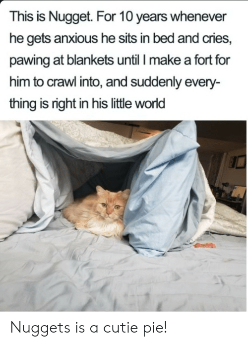 Pawing: This is Nugget. For 10 years whenever  he gets anxious he sits in bed and cries,  pawing at blankets until I make a fort for  him to crawl into, and suddenly every-  thing is right in his little world Nuggets is a cutie pie!