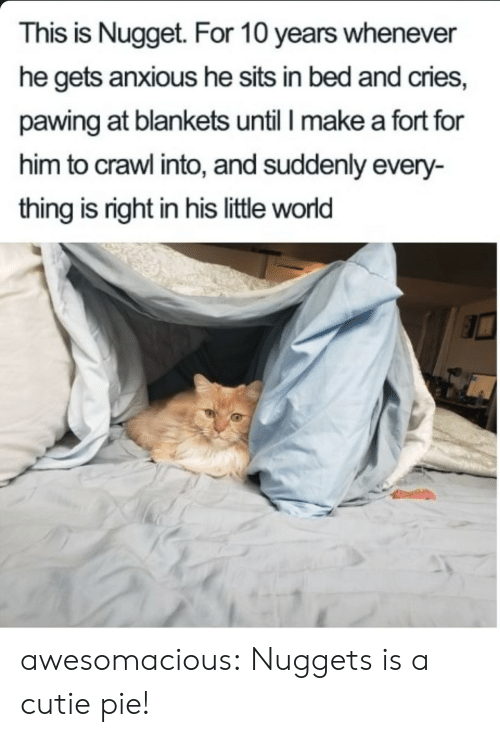 crawl: This is Nugget. For 10 years whenever  he gets anxious he sits in bed and cries,  pawing at blankets until I make a fort for  him to crawl into, and suddenly every-  thing is right in his little world awesomacious:  Nuggets is a cutie pie!