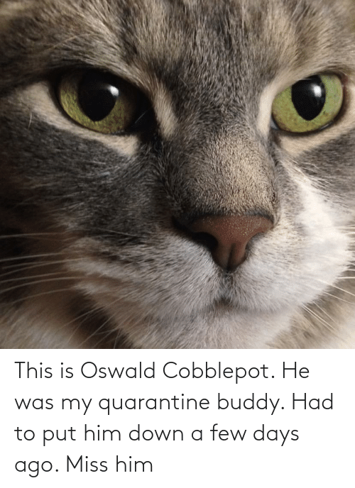 oswald: This is Oswald Cobblepot. He was my quarantine buddy. Had to put him down a few days ago. Miss him