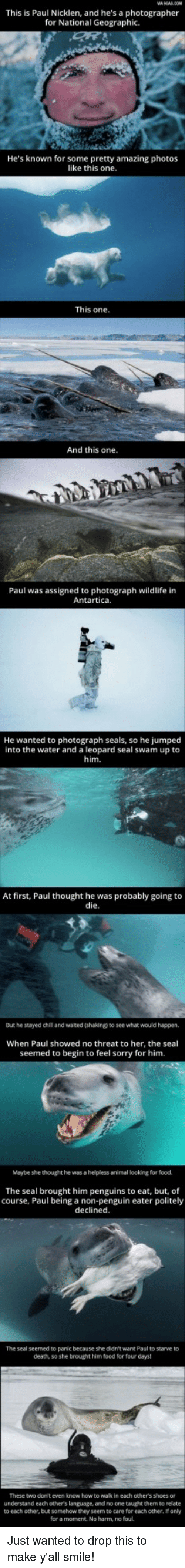 leopard: This is Paul Nicklen, and he's a photographer  for National Geographic.  He's known for some pretty amazing photos  like this one  This one  And this one.  Paul was assigned to photograph wildlife in  Antartica.  He  wanted to photograph seals, so he jumped  into the water and a leopard seal swam up to  him.  At first, Paul thought he was probably going to  die  But he stayed chil and waited (shaking) to see what would happen,  When Paul showed no threat to her, the seal  seemed to begin to feel sorry for him.  Maybe she thought he was a helpless animal looking for food.  The seal brought him penguins to eat, but, of  course, Paul being a non-penguin eater politely  declined.  The seal seemed to panic because she didn't want Paul to starve to  death, so she brought him food for four days  These two don't even know how to wak in each other's shoes or  understand each others language, and no one taught them to relate  to each other, but somehow they seem to care for each other, If only  for a moment. No harm, no foul. Just wanted to drop this to make y'all smile!