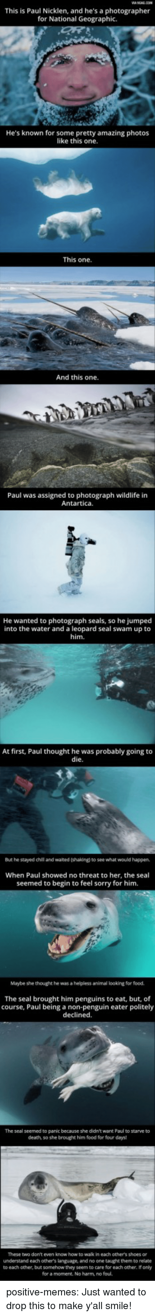 leopard: This is Paul Nicklen, and he's a photographer  for National Geographic.  He's known for some pretty amazing photos  like this one  This one  And this one.  Paul was assigned to photograph wildlife in  Antartica.  He  wanted to photograph seals, so he jumped  into the water and a leopard seal swam up to  him.  At first, Paul thought he was probably going to  die  But he stayed chil and waited (shaking) to see what would happen,  When Paul showed no threat to her, the seal  seemed to begin to feel sorry for him.  Maybe she thought he was a helpless animal looking for food.  The seal brought him penguins to eat, but, of  course, Paul being a non-penguin eater politely  declined.  The seal seemed to panic because she didn't want Paul to starve to  death, so she brought him food for four days  These two don't even know how to wak in each other's shoes or  understand each others language, and no one taught them to relate  to each other, but somehow they seem to care for each other, If only  for a moment. No harm, no foul. positive-memes:  Just wanted to drop this to make y'all smile!