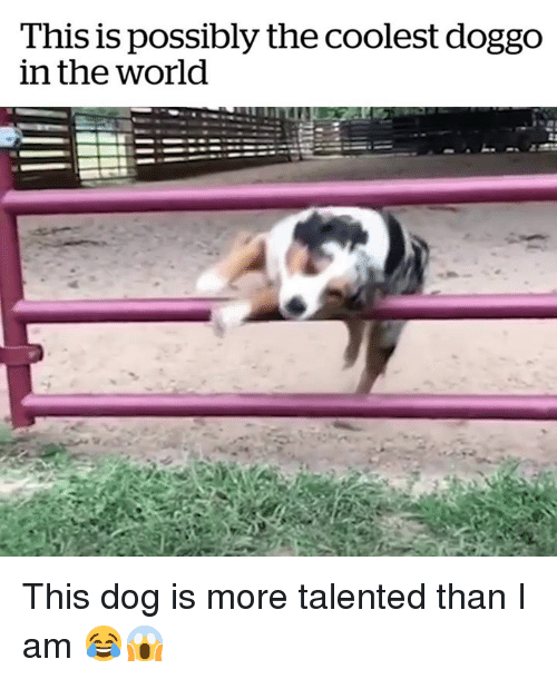 World, Doggo, and Dog: This is possibly the coolest doggo  in the world This dog is more talented than I am 😂😱
