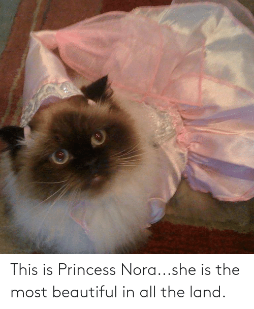 nora: This is Princess Nora...she is the most beautiful in all the land.