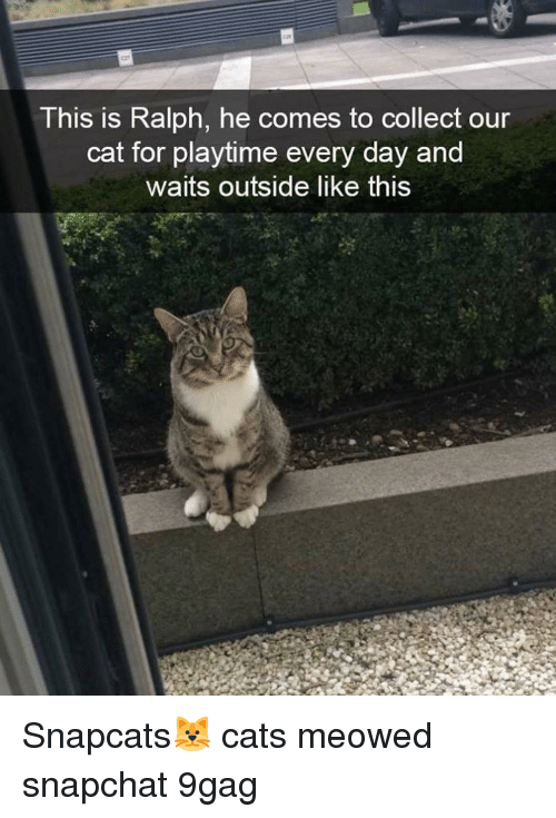 Playtime: This is Ralph, he comes to collect our  cat for playtime every day and  waits outside like this Snapcats🐱 cats meowed snapchat 9gag