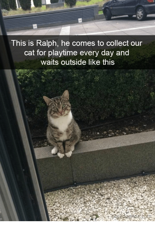 Playtime: This is Ralph, he comes to collect our  cat for playtime every day and  waits outside like this