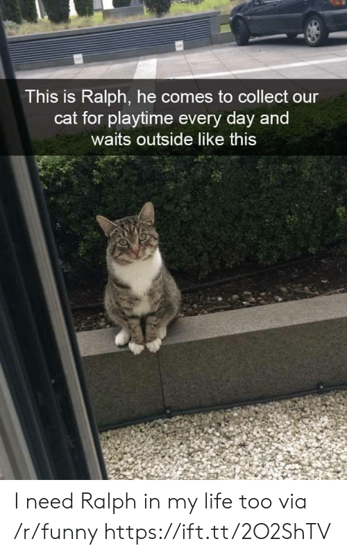 Playtime: This is Ralph, he comes to collect our  cat for playtime every day and  waits outside like this I need Ralph in my life too  via /r/funny https://ift.tt/2O2ShTV