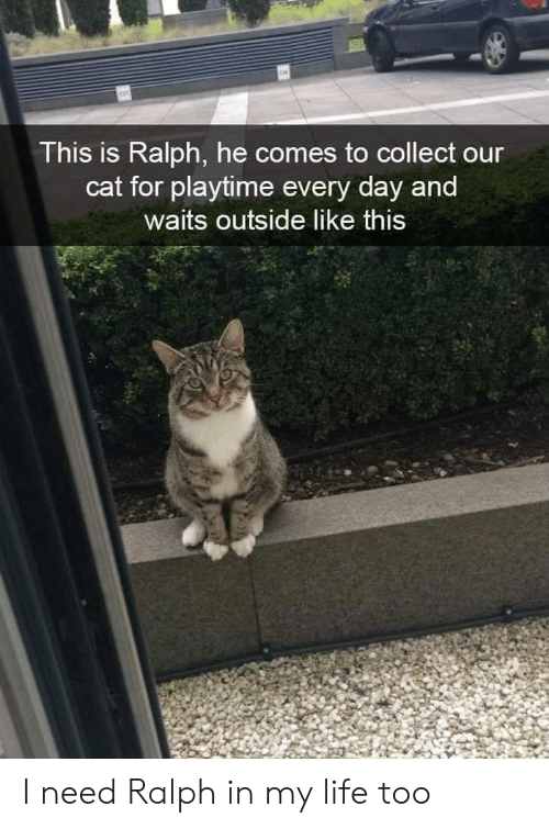 Playtime: This is Ralph, he comes to collect our  cat for playtime every day and  waits outside like this I need Ralph in my life too