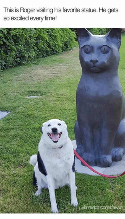 Rogered: This is Roger visiting his favorite statue. He gets  so excited every time!
