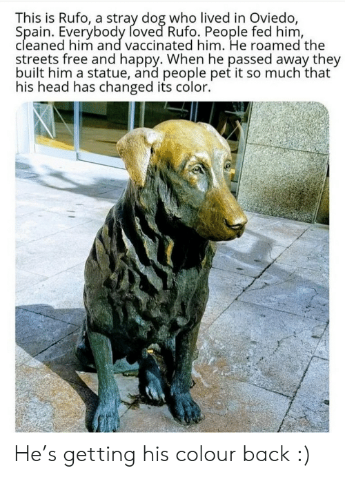 fed: This is Rufo, a stray dog who lived in Oviedo,  Spain. Everybody foved Rufo. People fed him,  cleaned him and vaccinated him. He roamed the  streets free and happy. When he passed away they  built him a statue, and people pet it so much that  his head has changed its color. He's getting his colour back :)