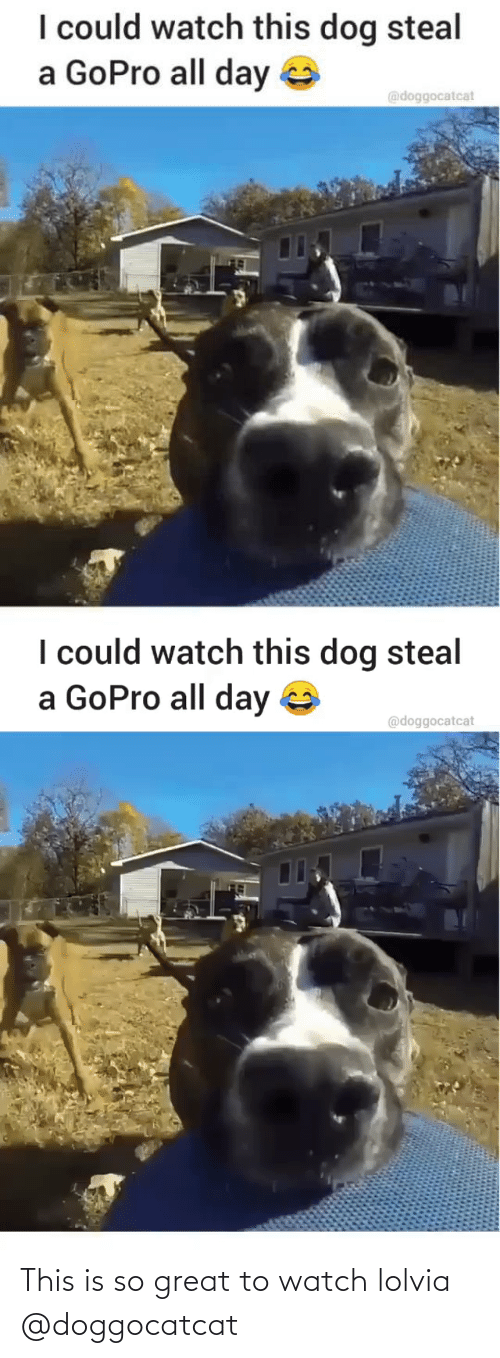lol: This is so great to watch lolvia @doggocatcat