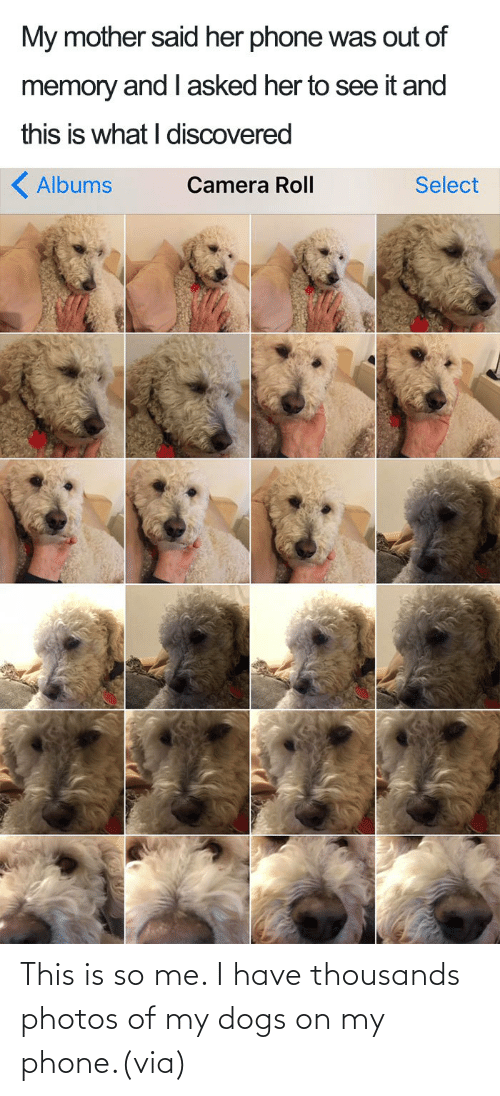 Phone: This is so me. I have thousands photos of my dogs on my phone.(via)