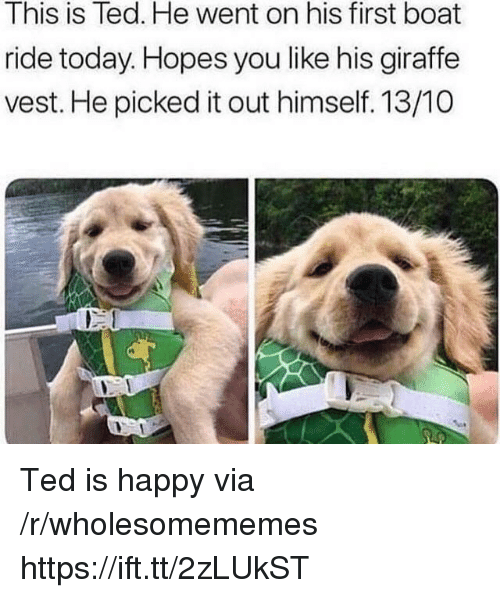 Giraffe: This is Ted. He went on his first boat  ride today. Hopes you like his giraffe  vest. He picked it out himself. 13/10  rt Ted is happy via /r/wholesomememes https://ift.tt/2zLUkST