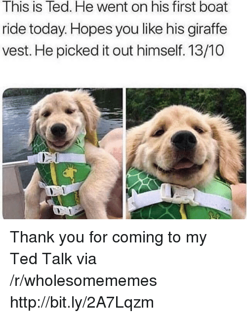Ted, Thank You, and Giraffe: This is Ted. He went on his first boat  ride today. Hopes you like his giraffe  vest. He picked it out himself. 13/10  rt Thank you for coming to my Ted Talk via /r/wholesomememes http://bit.ly/2A7Lqzm