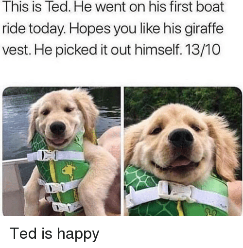 Giraffe: This is Ted. He went on his first boat  ride today. Hopes you like his giraffe  vest. He picked it out himself. 13/10  rt Ted is happy