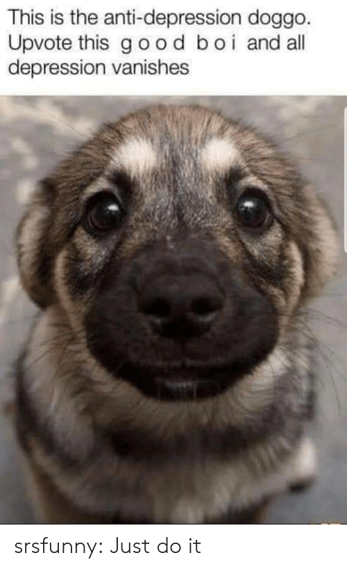 Just Do It, Tumblr, and Blog: This is the anti-depression doggo  Upvote this good boi and all  depression vanishes srsfunny:  Just do it