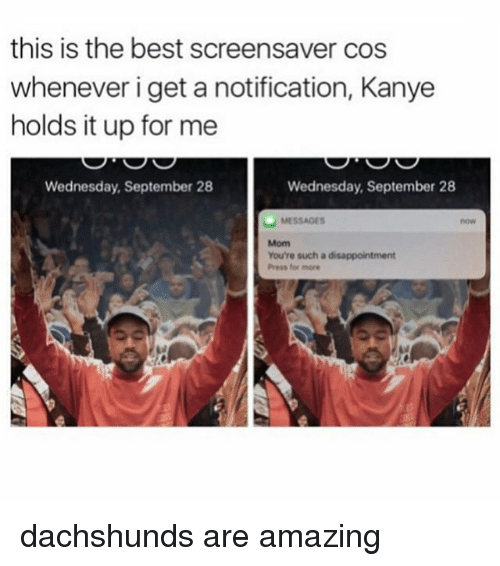 dachshunds: this is the best screensaver cos  whenever i get a notification, Kanye  holds it up for me  Wednesday, September 28  Wednesday, September 28  MESSAGES  You're such a disappointment  Press for more dachshunds are amazing