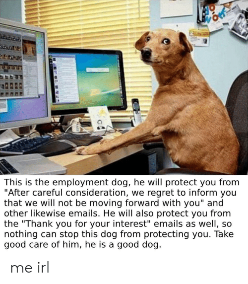 "consideration: This is the employment dog, he will protect you from  ""After careful consideration, we regret to inform you  that we will not be moving forward with you"" and  other likewise emails. He will also protect you from  the ""Thank you for your interest"" emails as well, so  nothing can stop this dog from protecting you. Take  good care of him, he is a good dog. me irl"