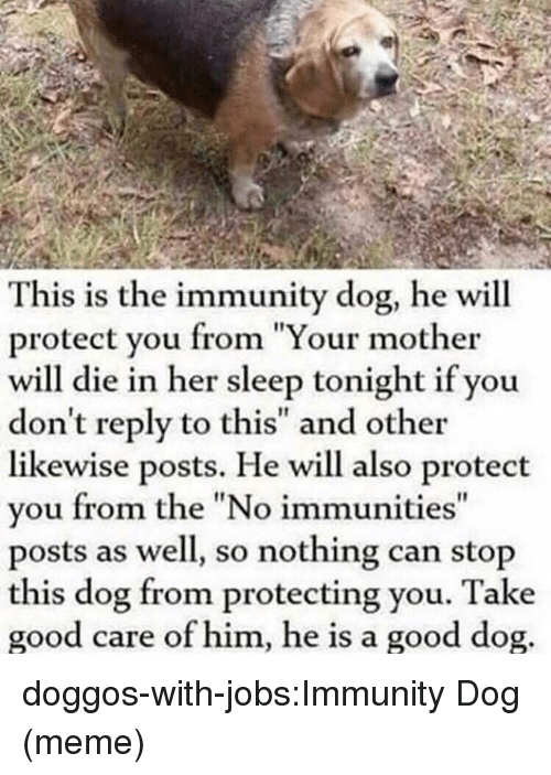 """Dog Meme: This is the immunity dog, he will  protect you from """"Your mother  will die in her sleep tonight if you  don't reply to this"""" and other  likewise posts. He will also protect  vou from the """"No immunities  posts as well, so nothing can stop  this dog from protecting you. Take  good care of him, he is a good dog  It doggos-with-jobs:Immunity Dog (meme)"""
