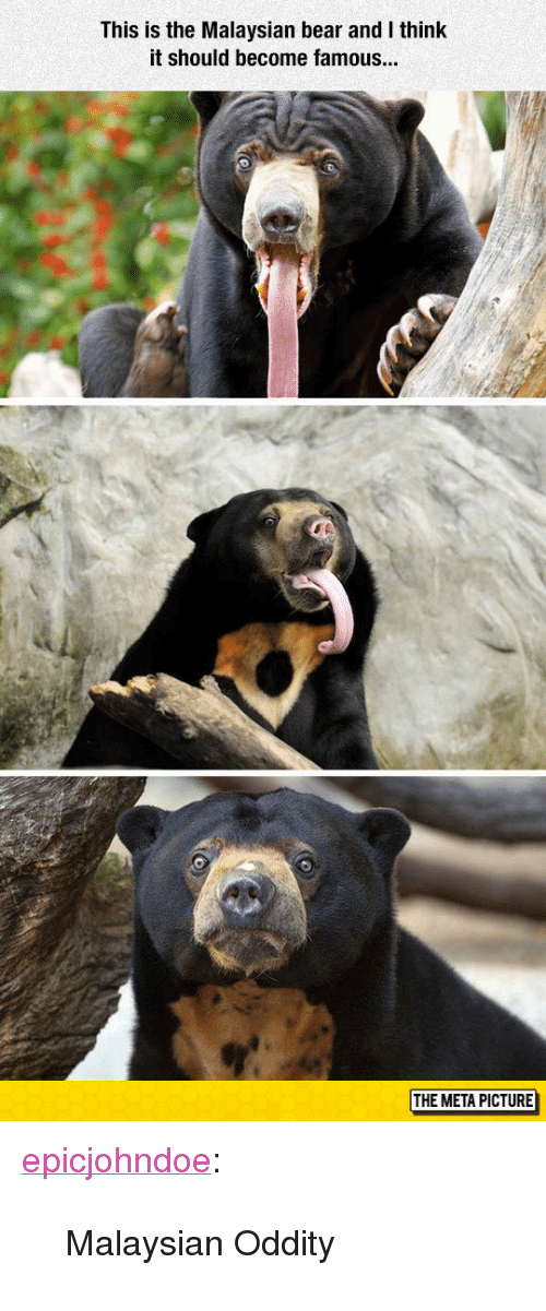 "Tumblr, Bear, and Blog: This is the Malaysian bear and I think  it should become famous  THE META PICTURE <p><a href=""https://epicjohndoe.tumblr.com/post/173203426639/malaysian-oddity"" class=""tumblr_blog"">epicjohndoe</a>:</p>  <blockquote><p>Malaysian Oddity</p></blockquote>"