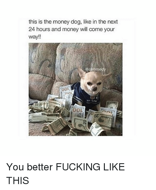 Money Dog: this is the money dog, like in the next  24 hours and money will come your  way!!  OOL You better FUCKING LIKE THIS