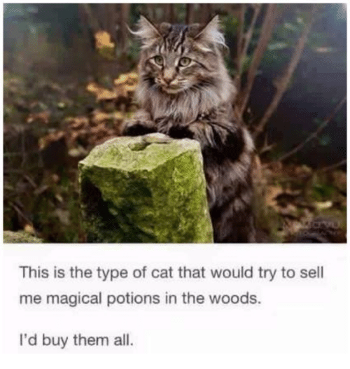 Memes, 🤖, and Cat: This is the type of cat that would try to sell  me magical potions in the woods.  I'd buy them all.
