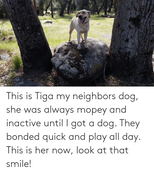 tiga: This is Tiga my neighbors dog, she was always mopey and inactive until I got a dog. They bonded quick and play all day. This is her now, look at that smile!